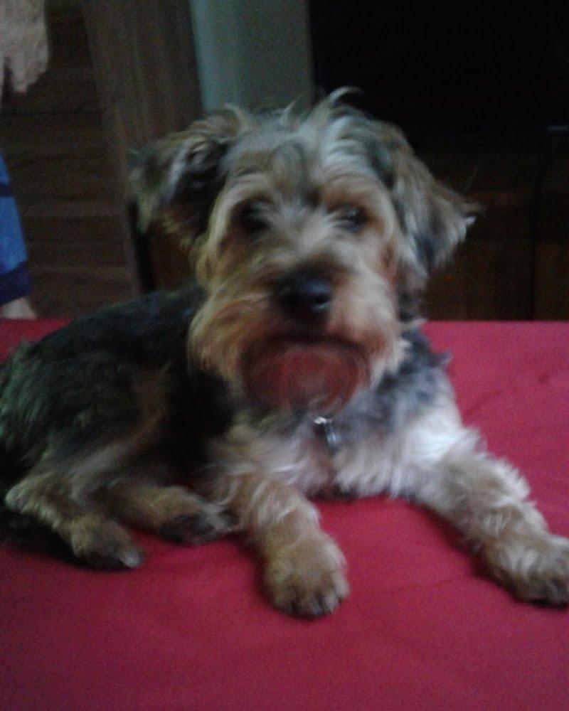 Taffy the dogsbody